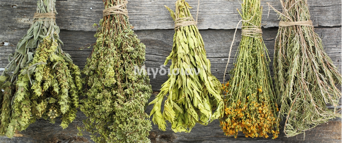 Selected herbs and herbal of wild nature